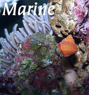 Marine Fish Food